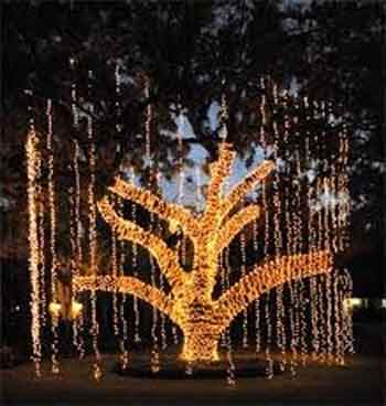 holiday-tree-lighting